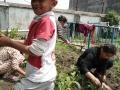 Gardening-21-05-2021-3