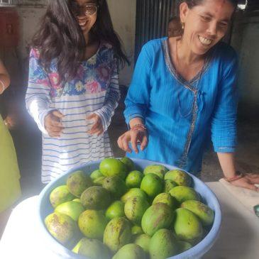 Saison des mangues